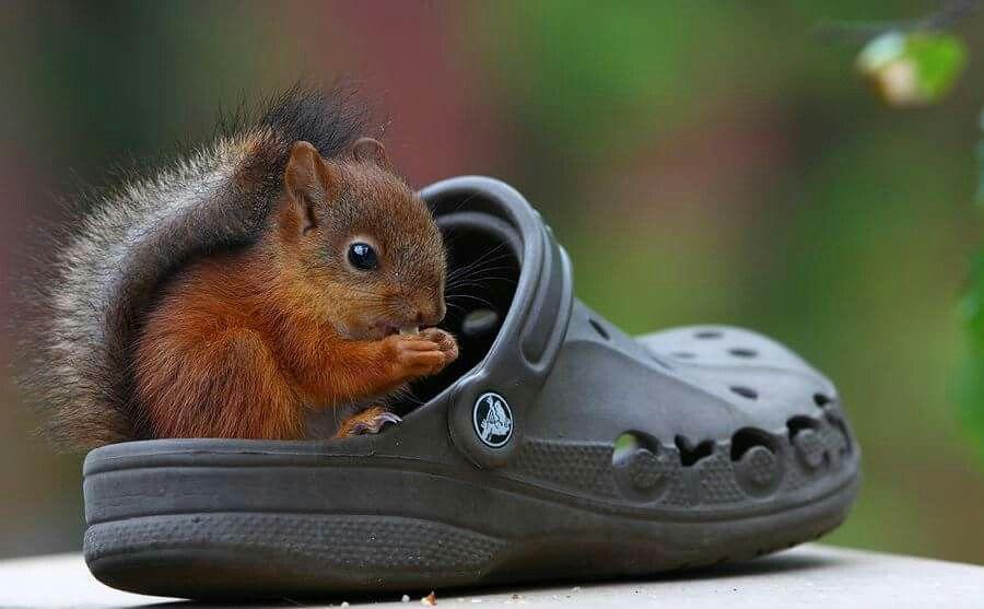 Veľká botka, mini veverka.