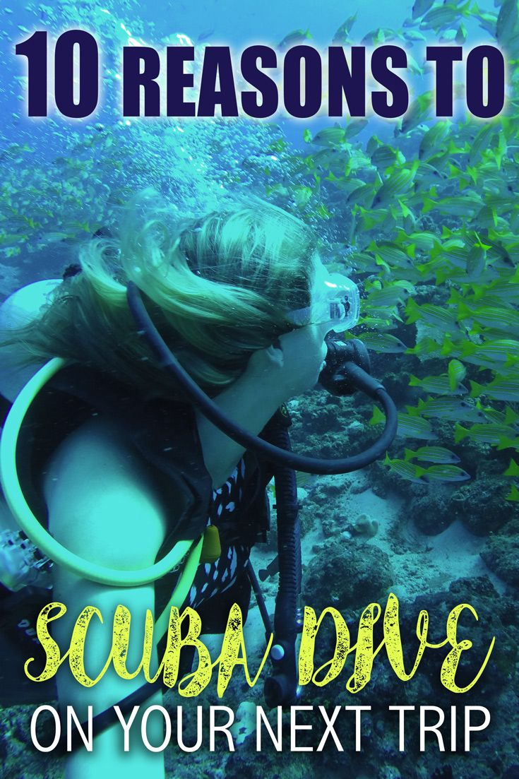 10 Reasons To Scuba Dive On Your Next Trip
