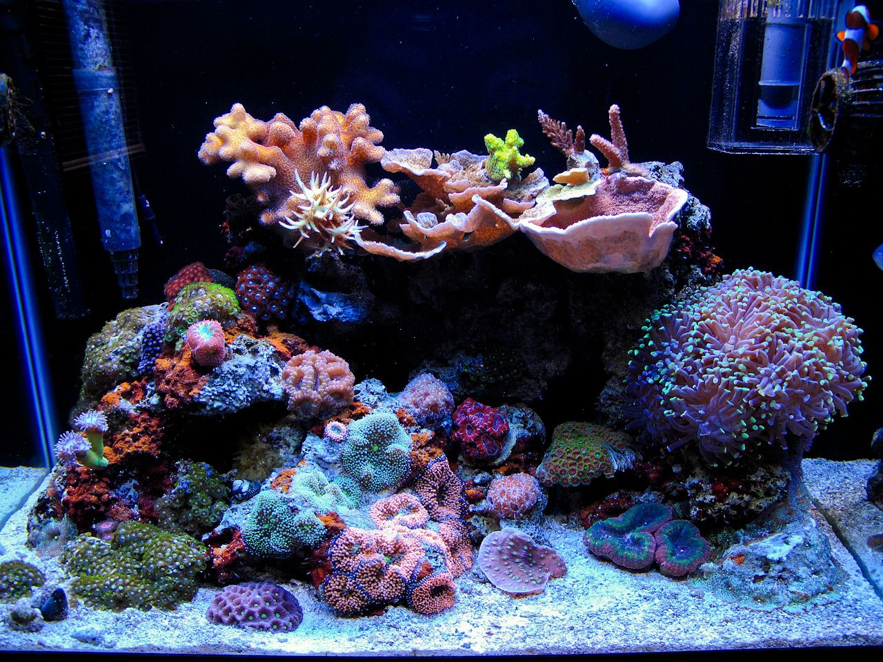 His 20 Gallon Nano Reef Is Diverse With Life Featuring A Wide Array Of Boldly Colored Coral Descriptio Reef Tank Aquascaping Saltwater Aquarium Reef Aquarium
