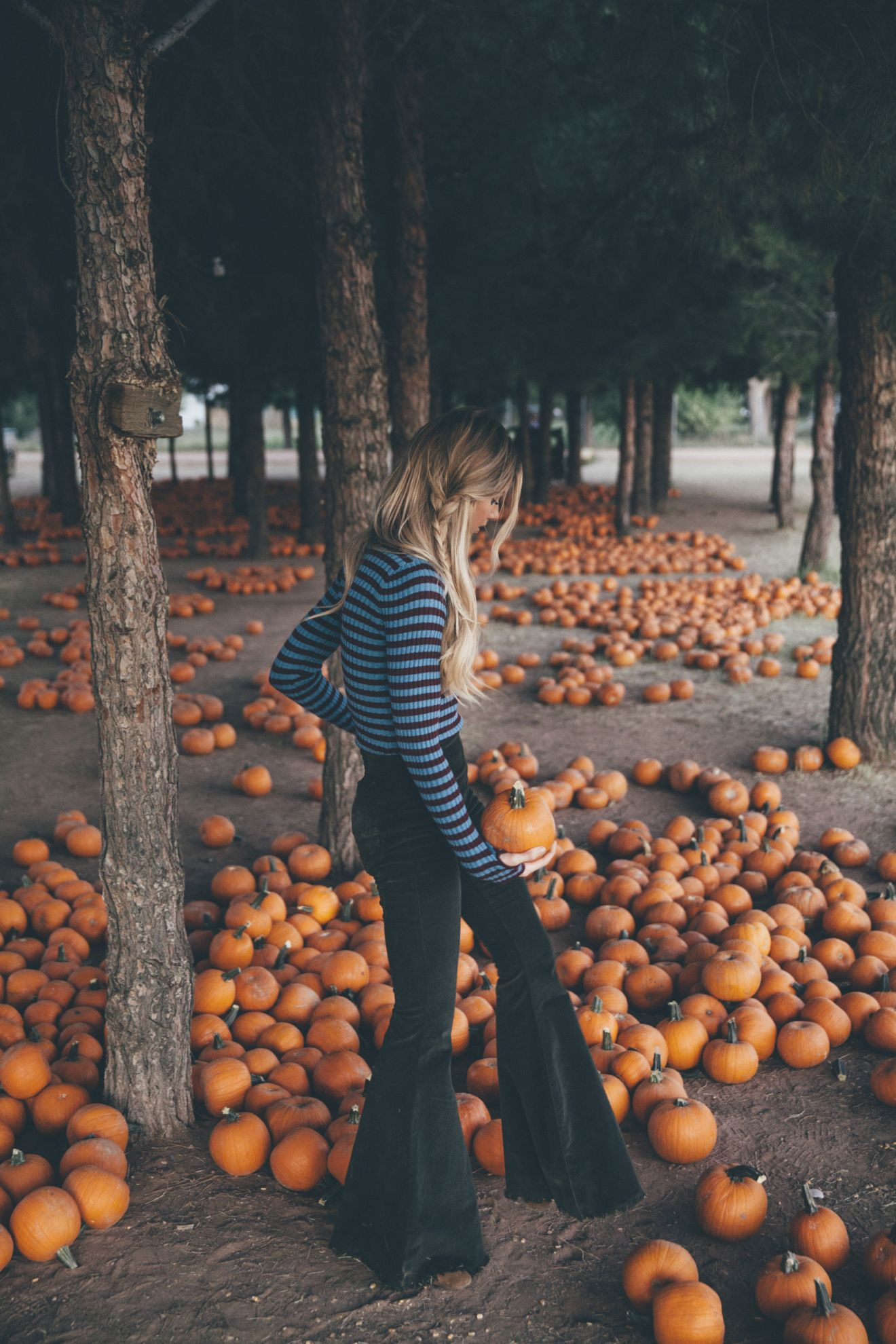 Oh My Gourd! - Kate Nelle #pumpkinpatch