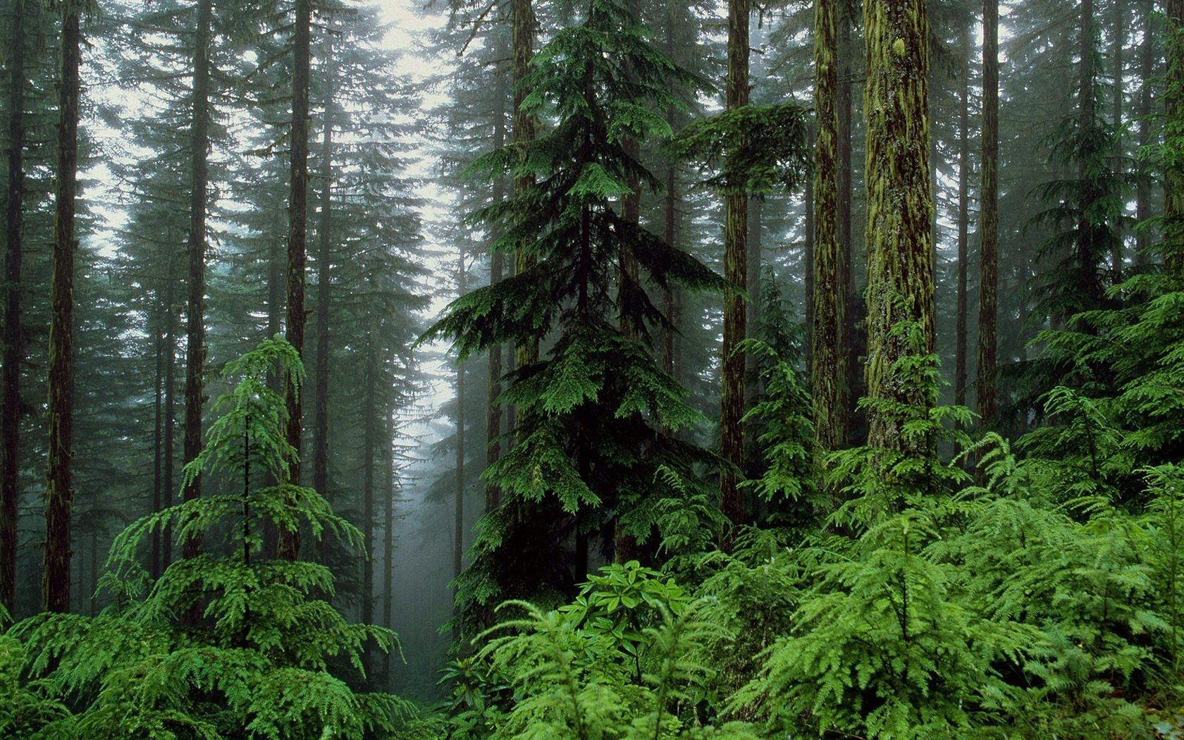 Humid Forest Forest Wallpaper Best Nature Wallpapers Nature Wallpaper