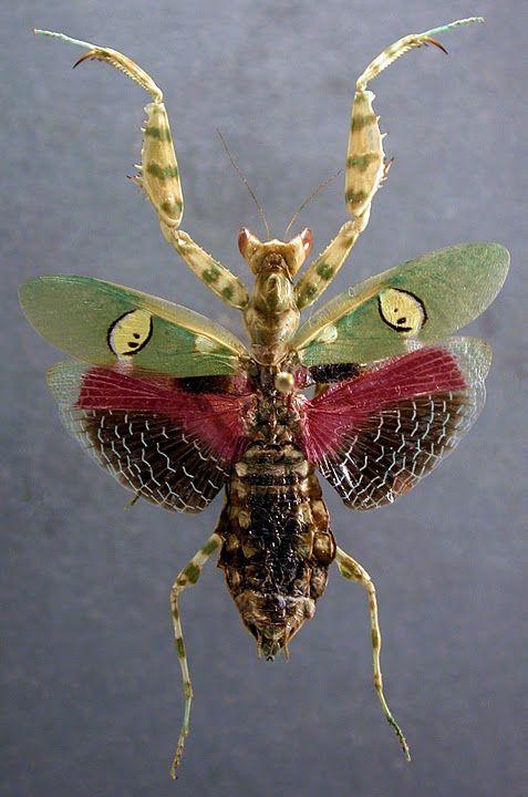 The Field Museum Insetos Insetos Voadores Artropodes Insetos