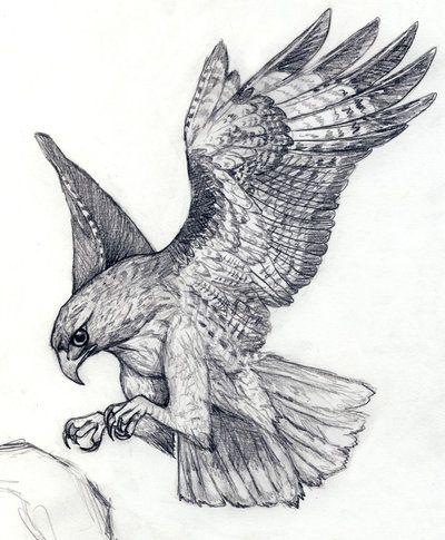 Hawk By Silvercrossfox Desenhos De Aves Pinturas De Animais