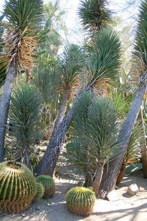 Photo of Moorten Botanical Garden