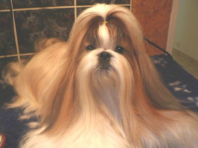Pin On Doggie Haircuts