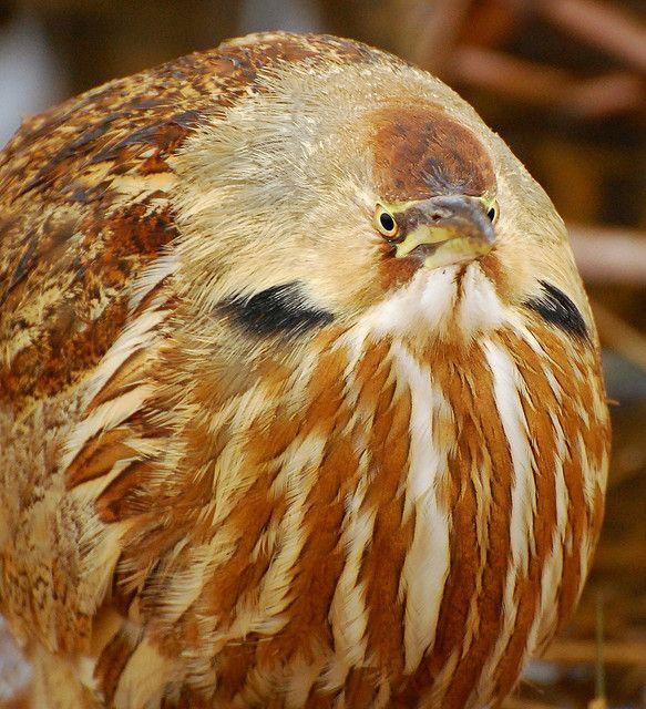 Square frame, round bird by delphinusorca, via Flickr