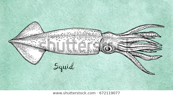Squid Ink Sketch On Old Paper Stock Vector Royalty Free 672119077 In 2020 Ink Sketch Squid Drawing Old Paper