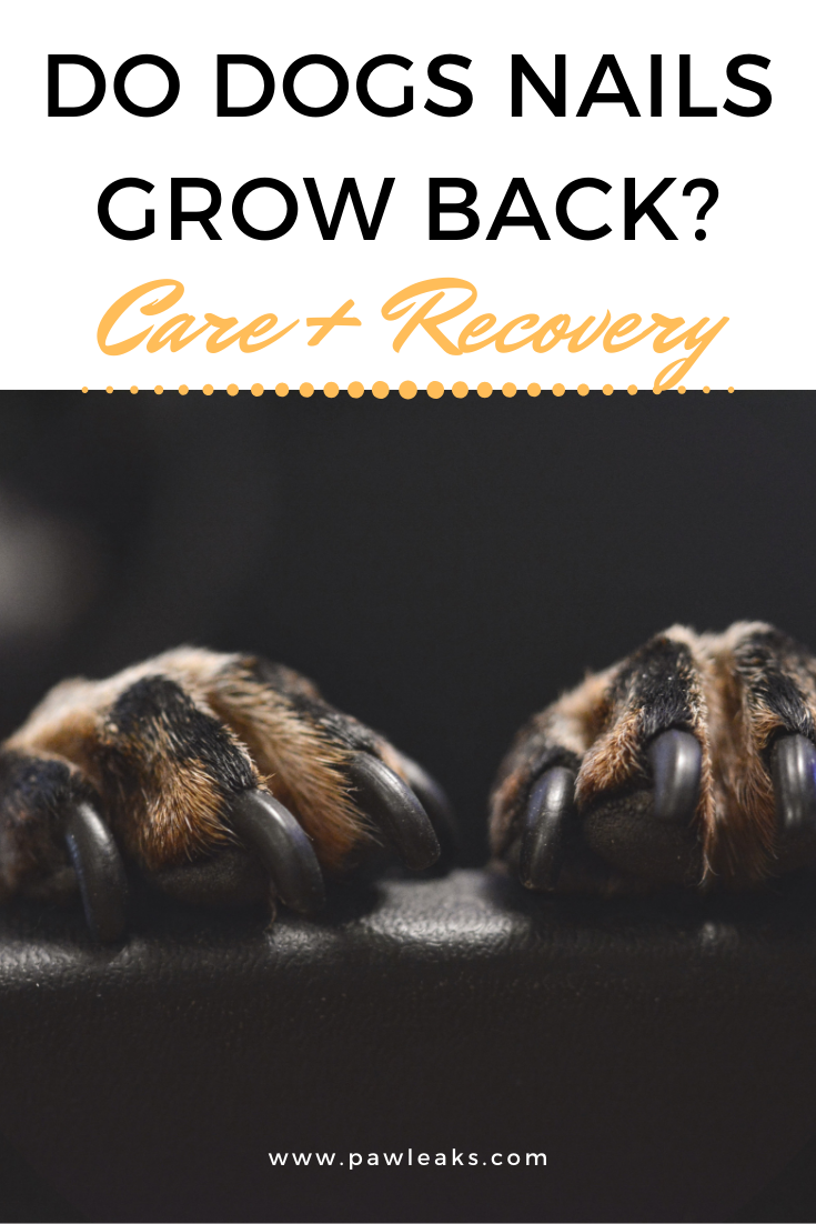 Do Dogs Toenails Grow Back? Care + Recovery Dog nails