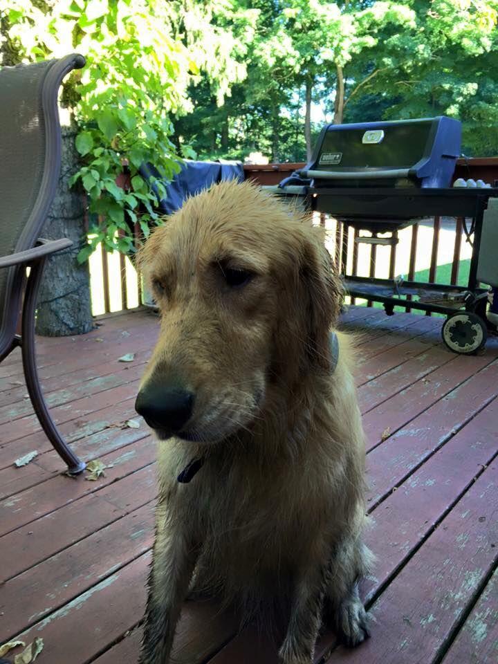 Alissa HeizlerMendozaConnecticut Animal Amber Alert July