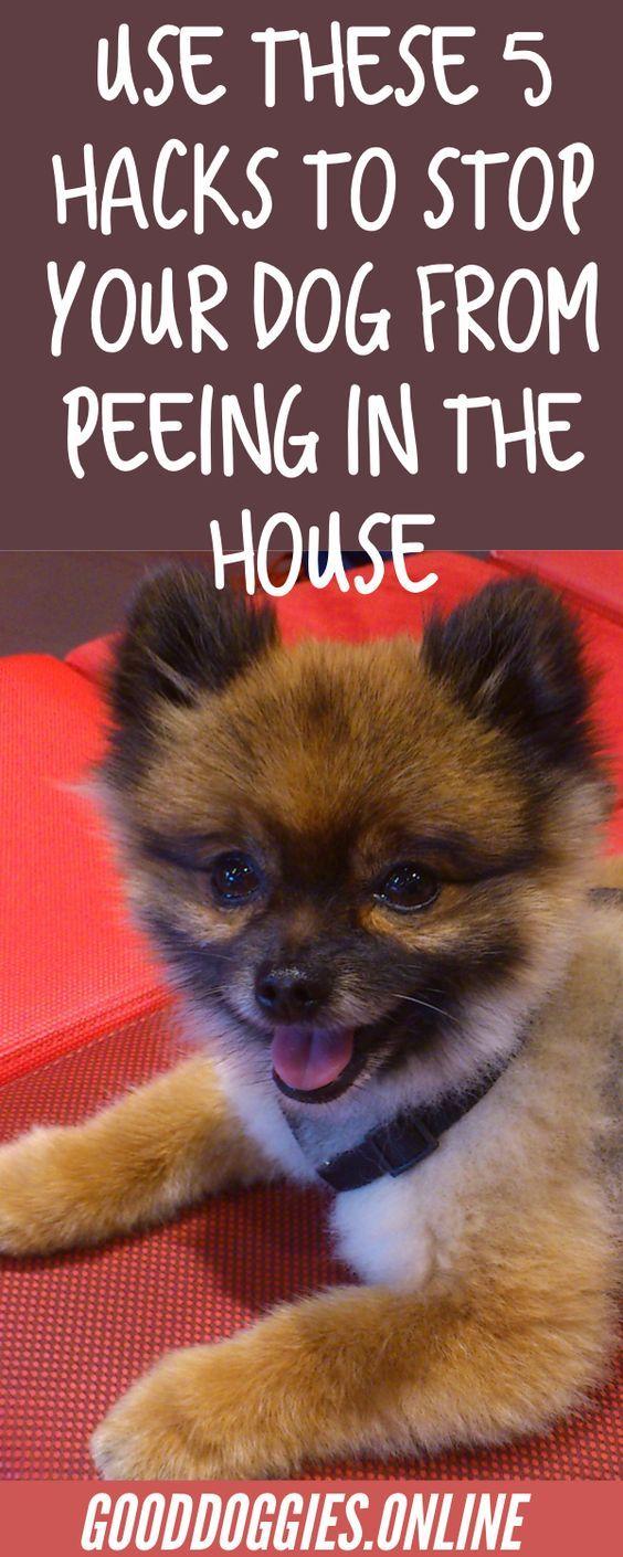 Dog Training Advice For New Dog Owners Dog Training Puppy