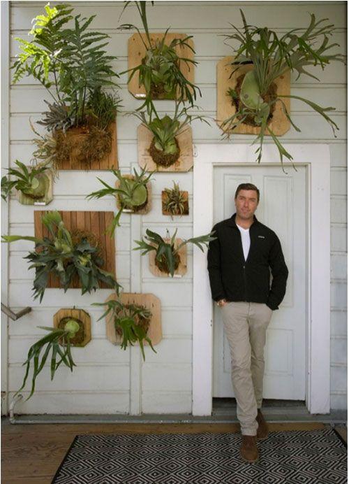 Pin Von Megan Fiona Auf Outdoor And Patio Wandgarten Zimmerpflanzen Hauspflanzen