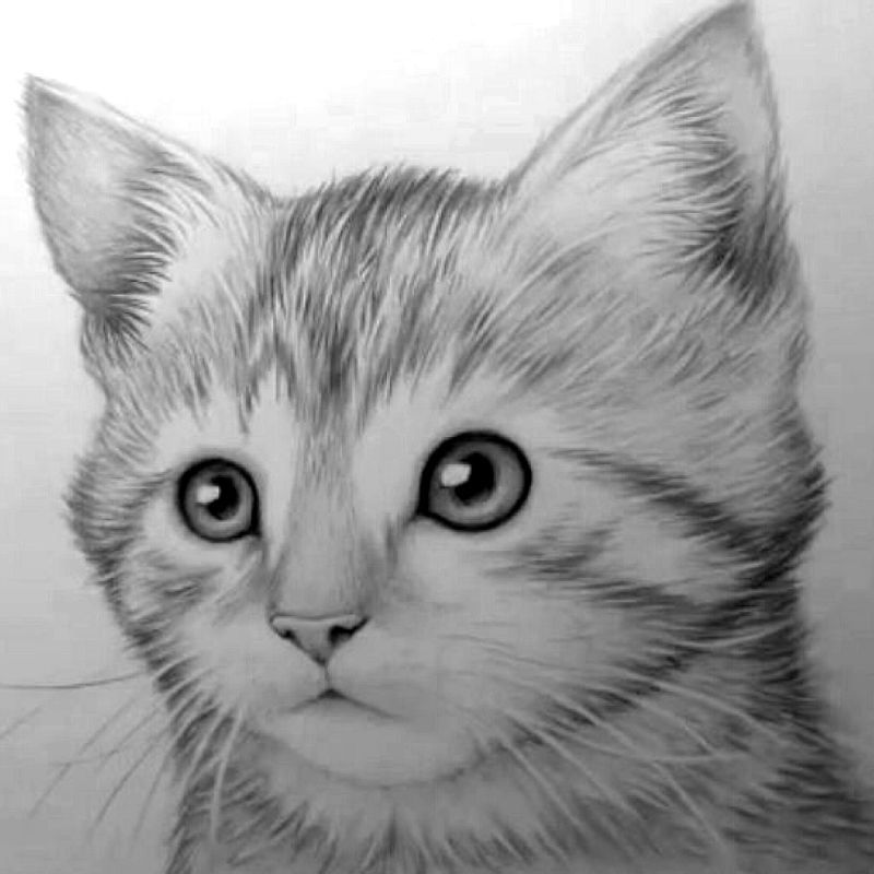 how to draw a kitten narrated step by step