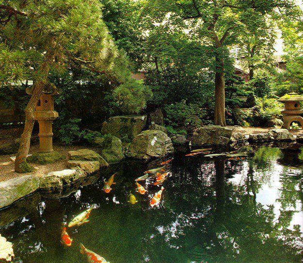 Koi Ponds And Gardens: Lively And Huge Koi In A Pond!