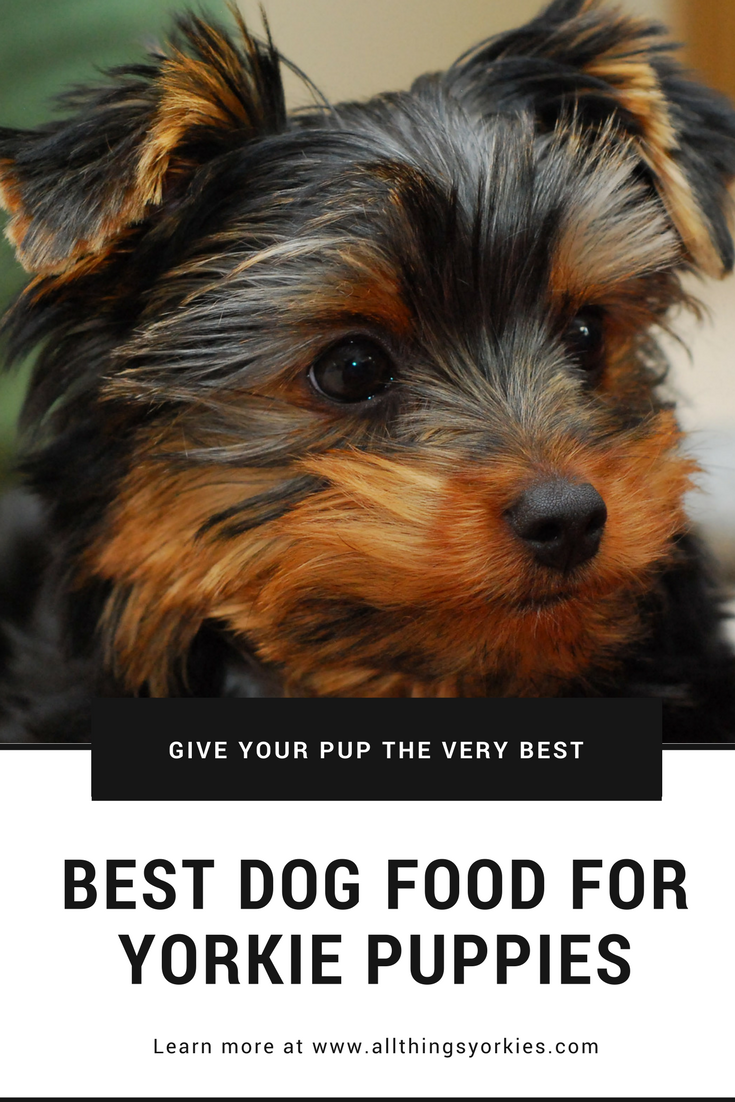 Learn Our Top Dog Food Recommendations For Yorkie Puppies And Why Puppies Need Food Formulated Specifically For Yorkie Puppy Yorkie Puppy Care Yorkie Terrier