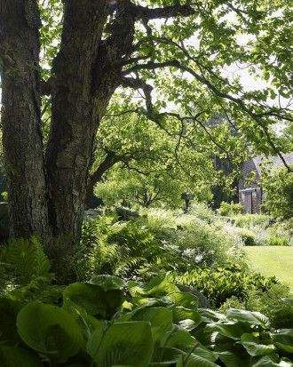 """See the """"Cherry Tree"""" in our Garden Tour: New Hampshire Garden gallery"""
