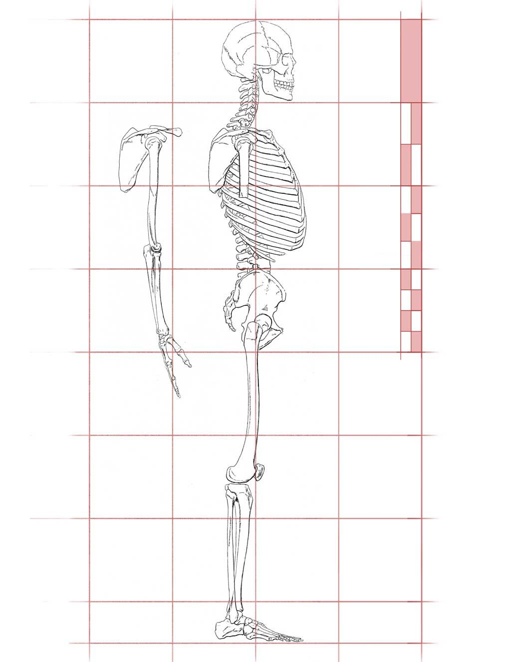 Body Proportion Drawing Worksheet