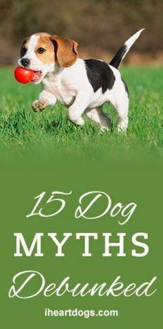 15 Dog Myths Rebunked