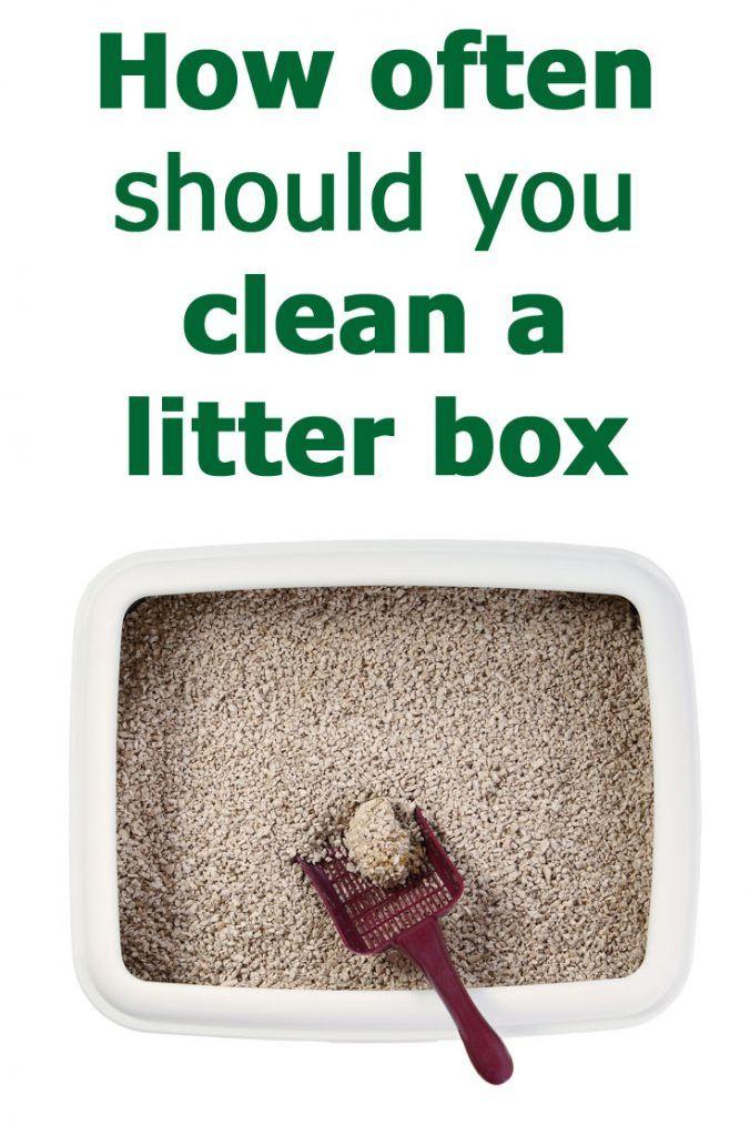 How Often Should You Clean a Litter Box Litter box
