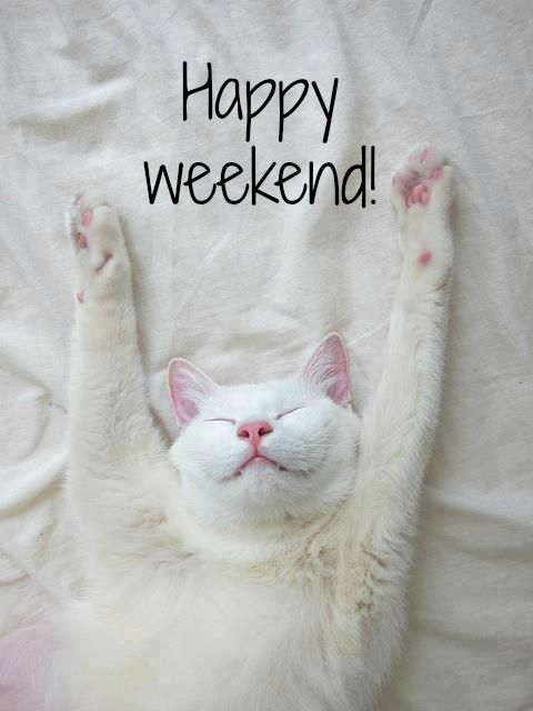 Image result for happy weekend cat images