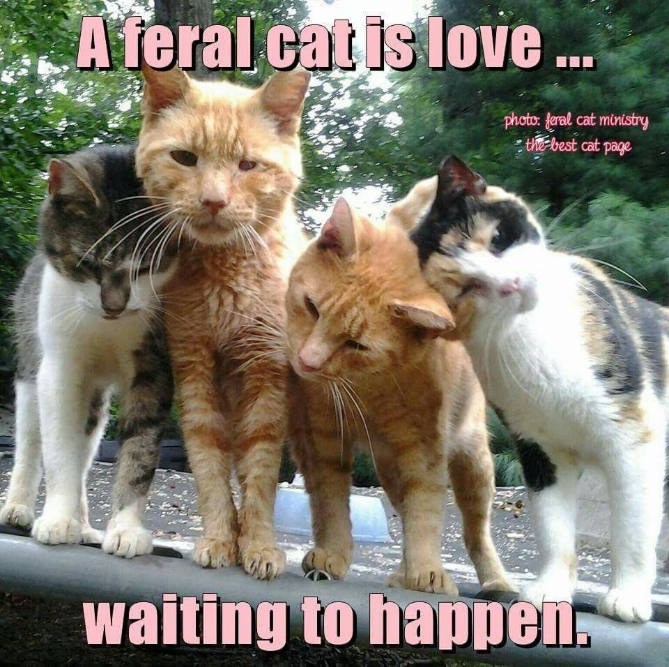 Feral cats Las Vegas Nevada has Heaven Can Wait. Free
