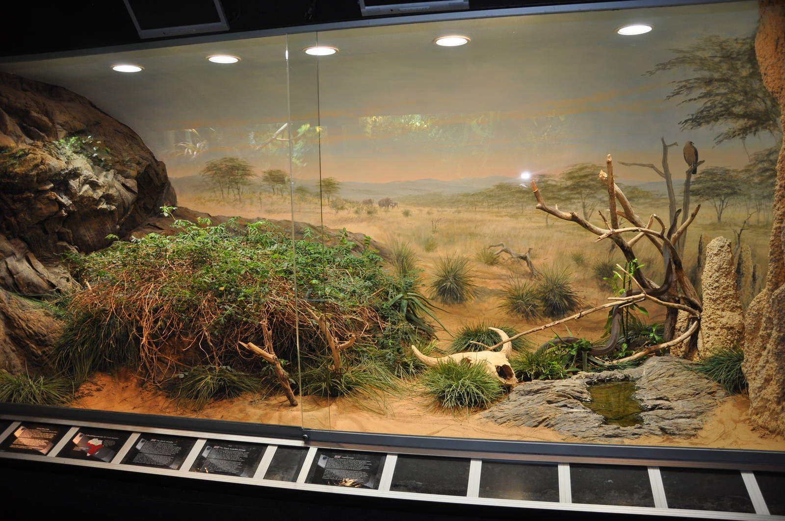 Gerelateerde afbeelding terrarium pinterest bearded dragon