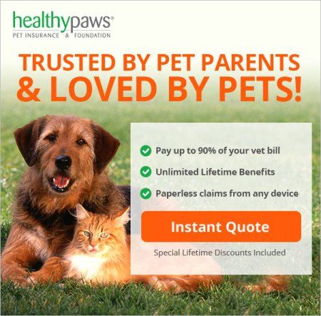 5 Best Practices For Taking Care Of Your Dog S Paws Pet Insurance Reviews Dog Paws Dog Care Tips