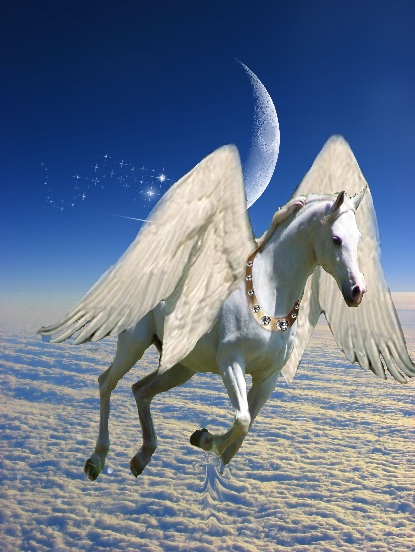 Popular Wallpaper Horse Deviantart - a4e080284716e539b944b7377236d818  Pic_76755.jpg