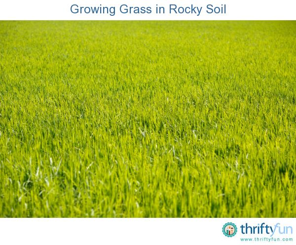 Growing Grass In Rocky Soil Growing Grass Planting Grass Best Grass Seed