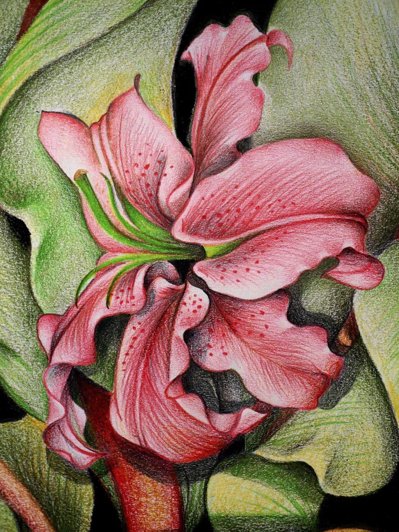 Diana arias de lirios diana arias pinterest coloured pencils diana arias de lirios draw flowerspainting flowerspainting artspanish izmirmasajfo Image collections