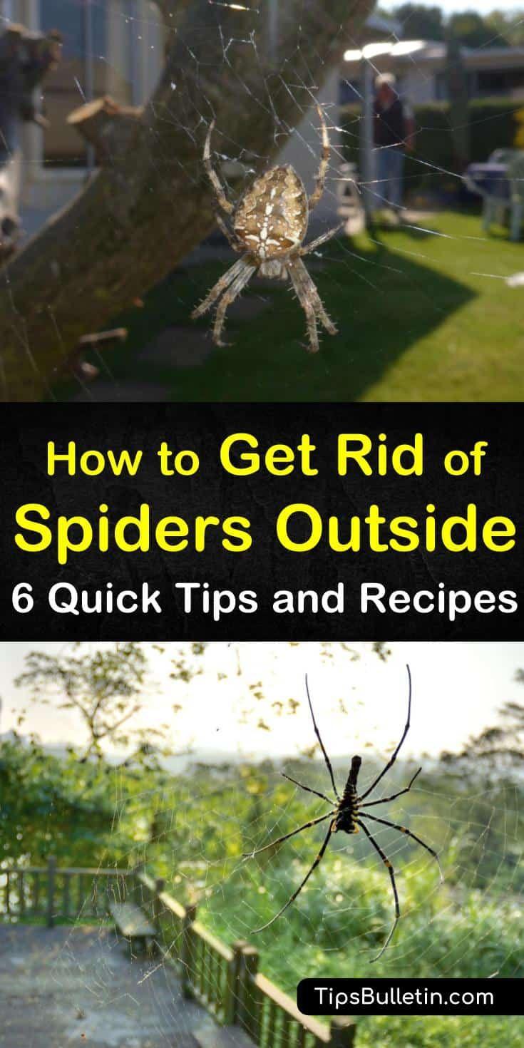 a4e1f5254716f0018516aa7b9702f457 - How To Get Rid Of A Spider Infestation Outside