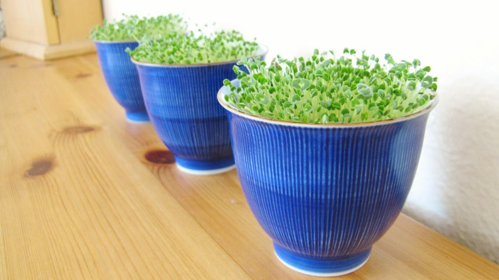 grow your own chia seeds spring decor Spring decor