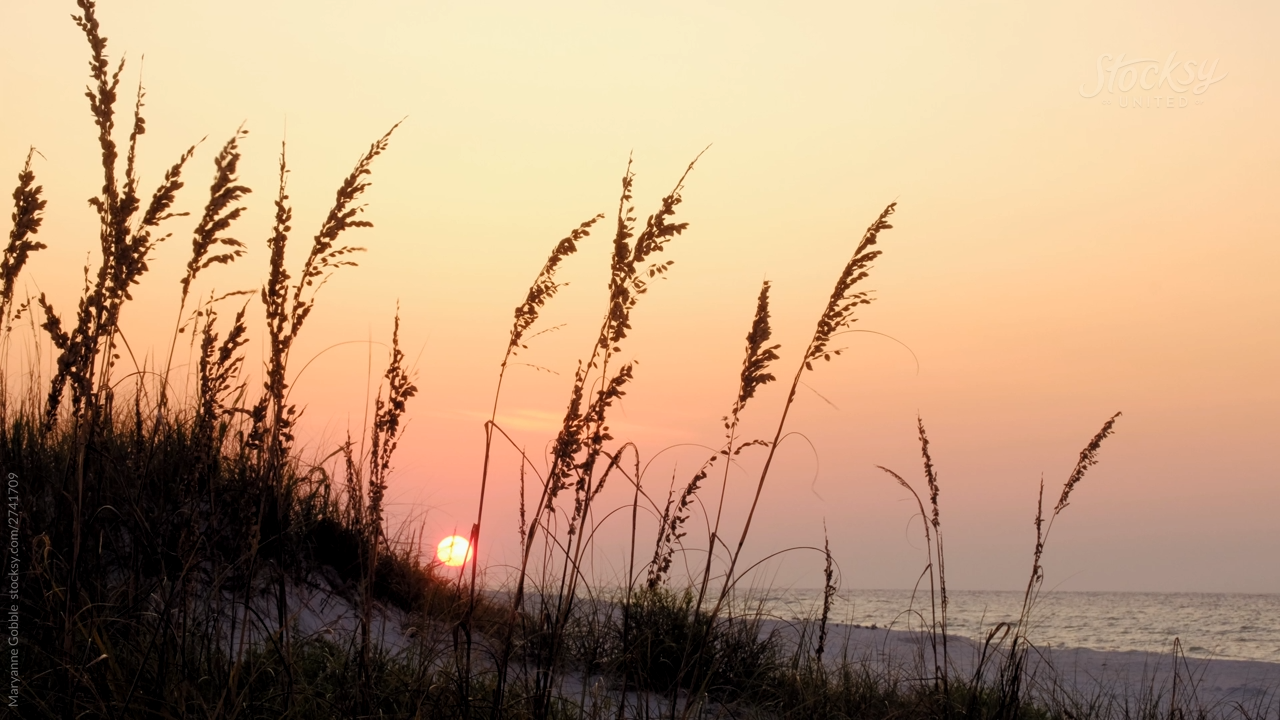4k stock video of a beautiful sunrise over Pensacola Beach with beach grass blowing in the breeze.  #pensacolabeach #sunrise #sunset #nature