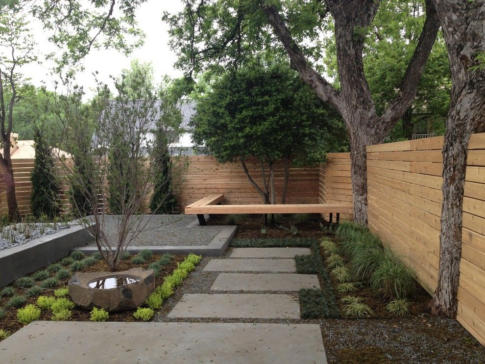 Impressive japanese coral bark maple trend dallas for Modern backyard ideas