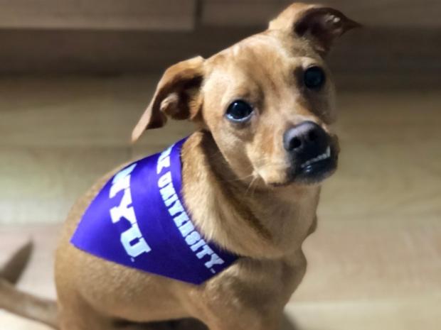 Nationwide Pet Insurance Alumni Pet Insurance Program Pet