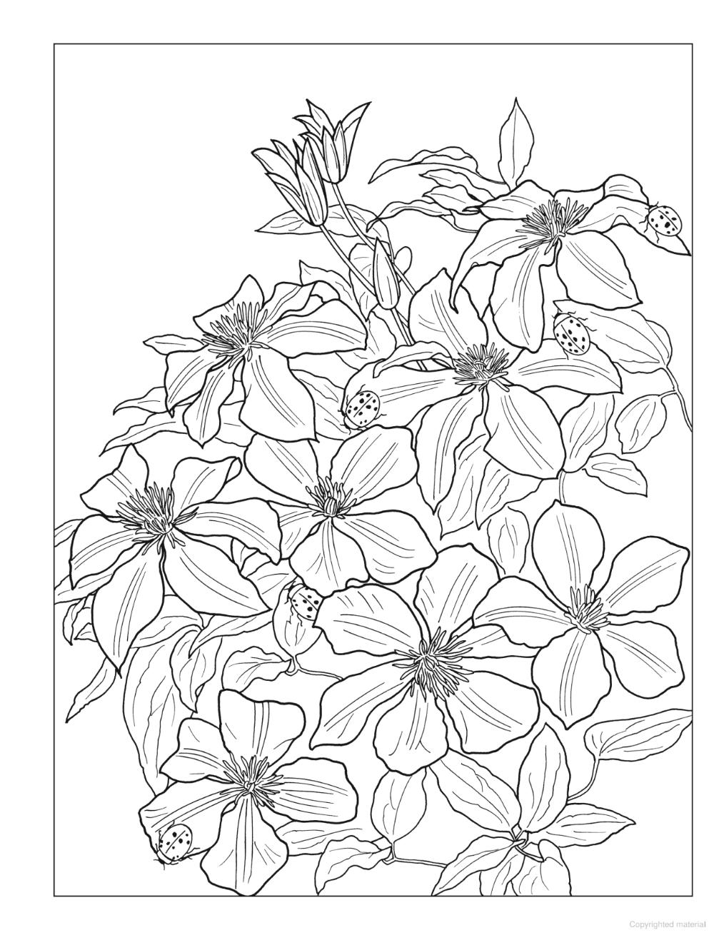 Creative Haven Beautiful Nature Designs Coloring Book Designs Coloring Books Beautiful Nature Nature Design
