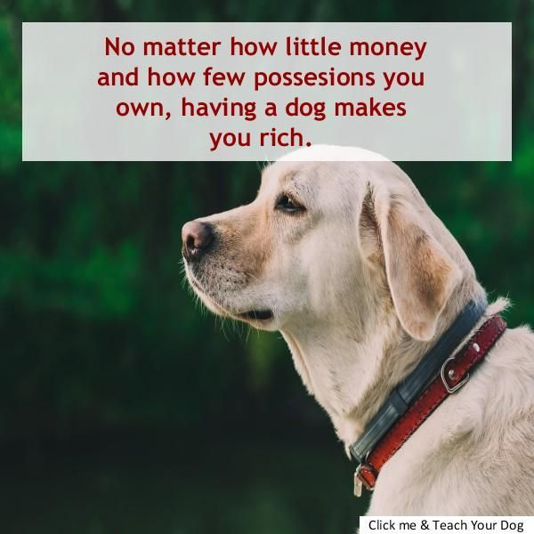 Training Dog Not To Bark At Strangers Dog Barking Pinterest