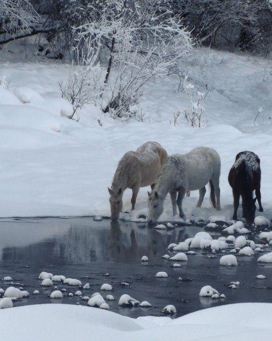 vosgesparis: ohhh Hello winter...