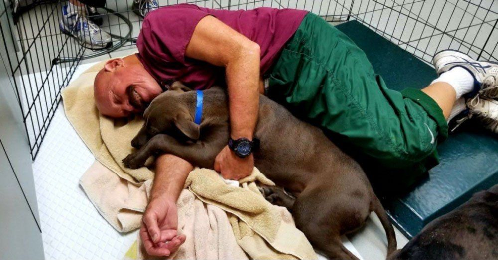 Shelter puppies, Humane society