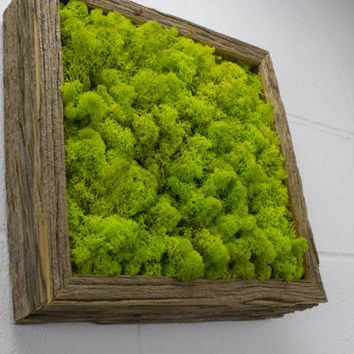 Green Wall Art green moss frame - water free green wall art, moss and preserved