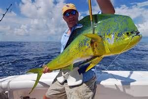 Gulf shores al events news local tips places to go and for Gulf shores alabama fishing