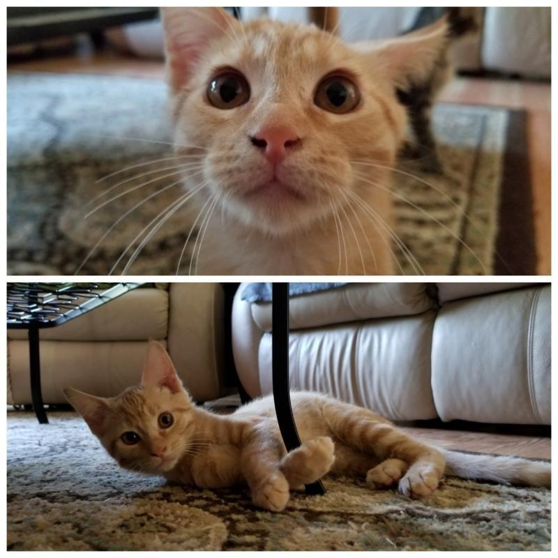 Adopt Gizmo on Pet adoption, Pets, Animals