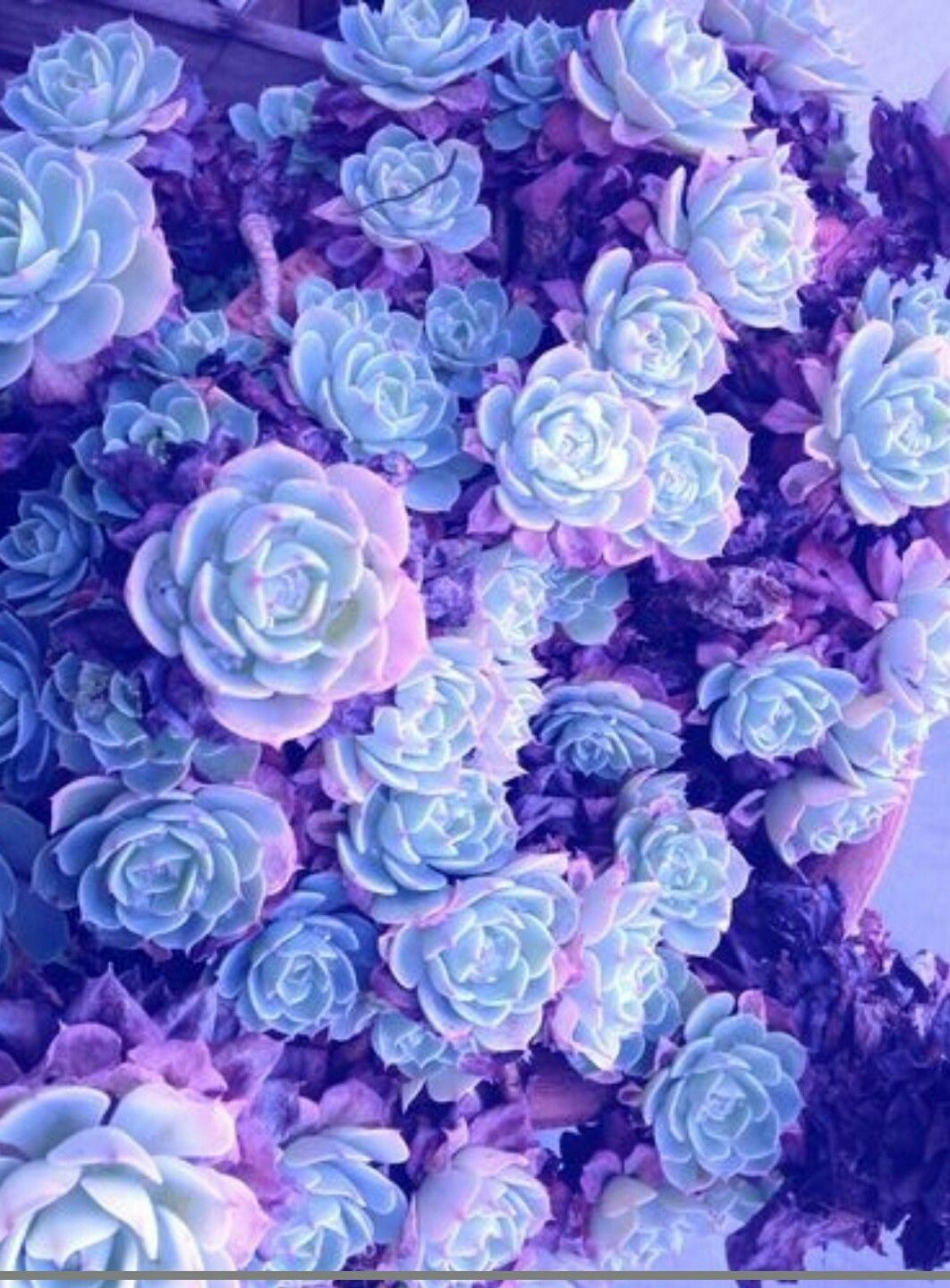 Wallpaper Pastel Purple Aesthetic Flowers Be inspired by the beauty of nature with this gorgeous collection of flower wallpapers and images. wallpaper pastel purple aesthetic flowers