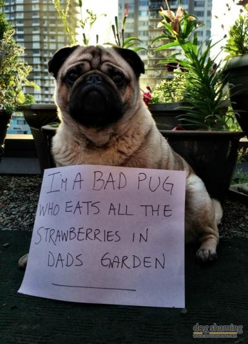 15 Incidents That Prove Dogs Are The Worst Gardeners In The