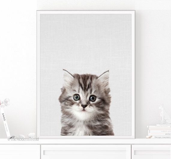 Kitten Pictures To Print
