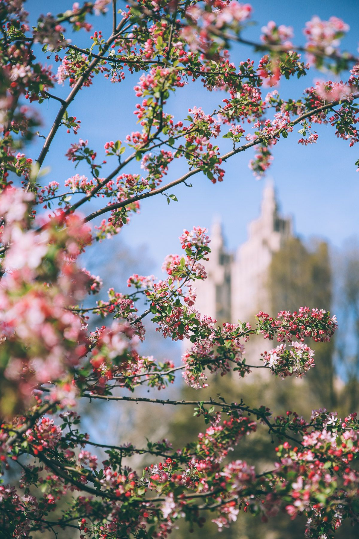 Giveaway Winners Come To Nyc Spring Pictures Spring Photos Spring Nature