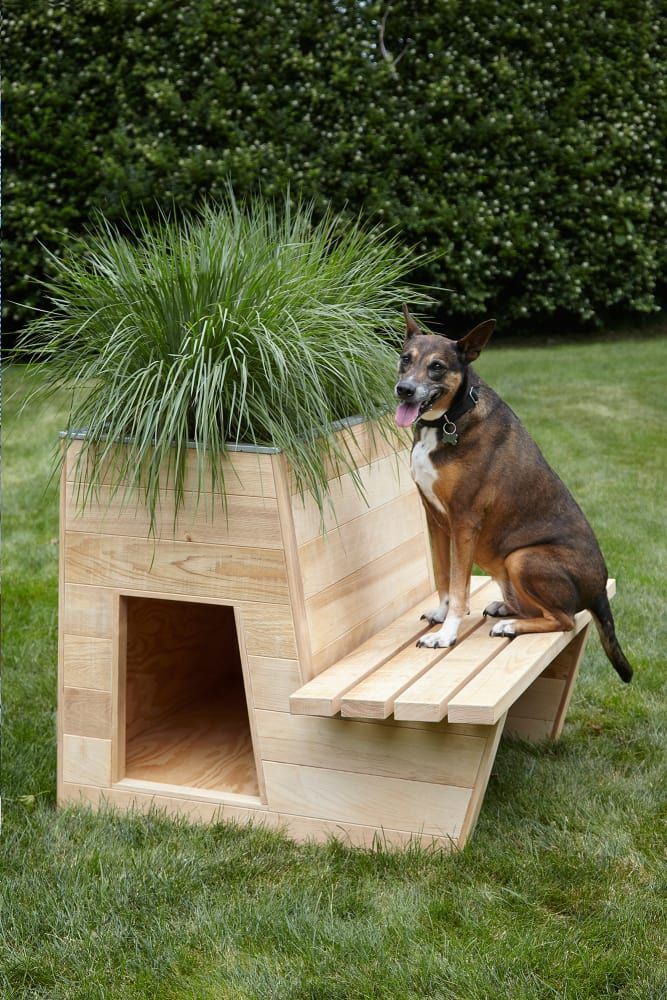 Photo of The most beautiful dog houses