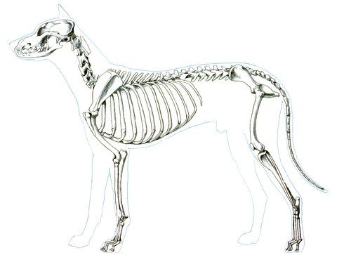 chapter 03  animal anatomy