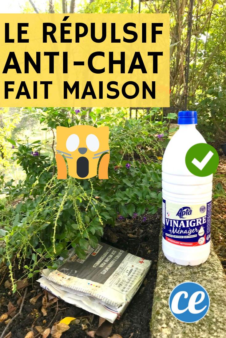 Le Repulsif Naturel Et Tres Efficace Que Tous Les Chats Detestent Repulsif Chat Jardin Eloigner Les Chats Repulsif Chat Naturel