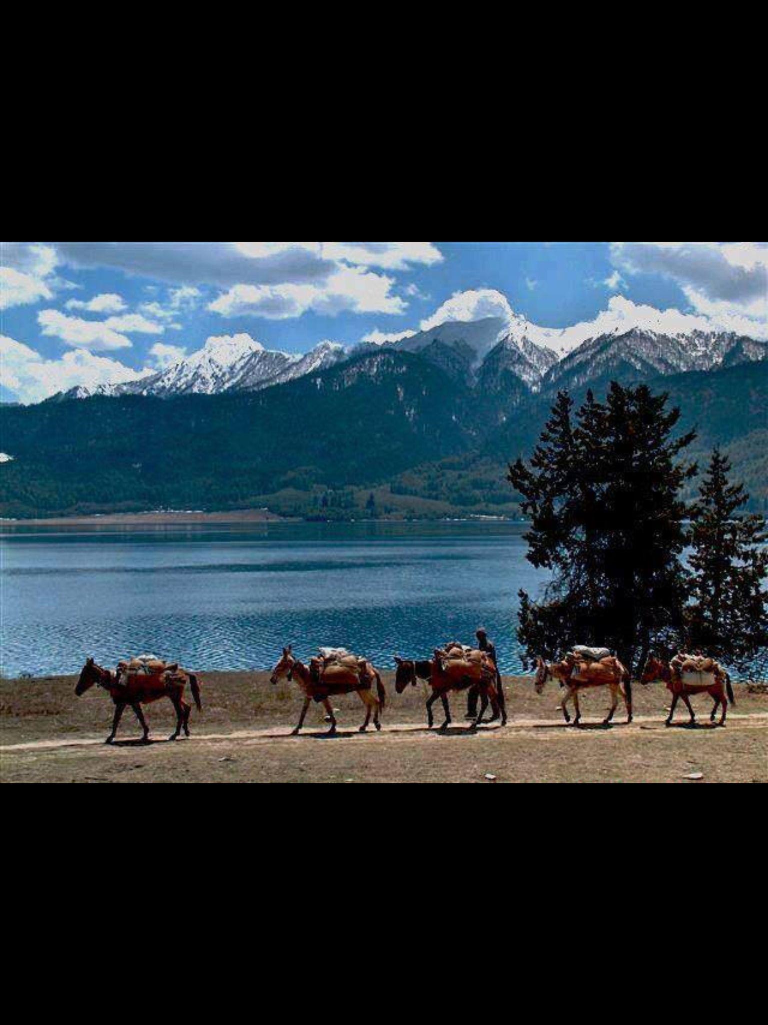 Rara Lake Mugu Nepal Nepal Diverse Landscape Beautiful Spots