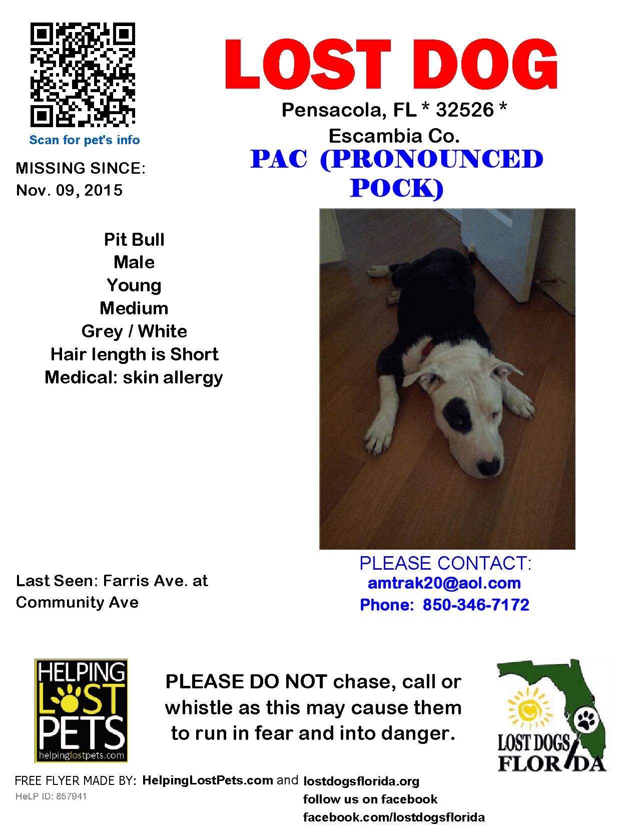 Lost Dog - Pit Bull - Pensacola, FL, United States | Lost